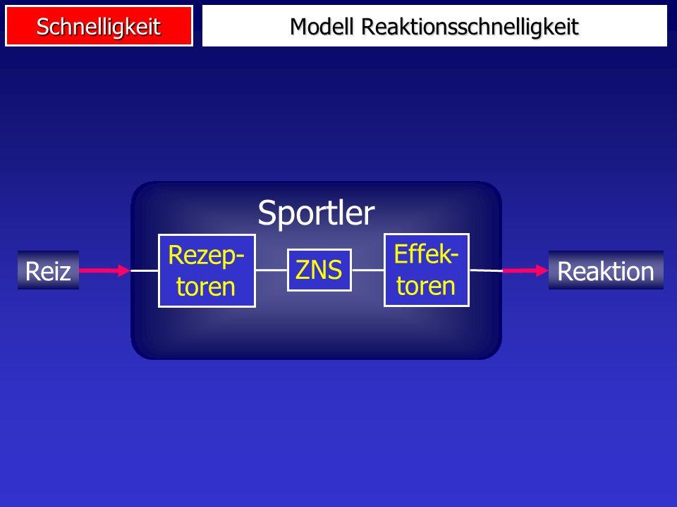 Schnelligkeit Eigenschaften des Nervensystems (Leitgeschwindigkeit, Erregbarkeit) Psychische Eigenschaften (Internes Abbild, Mobilisationsfähigkeit) A