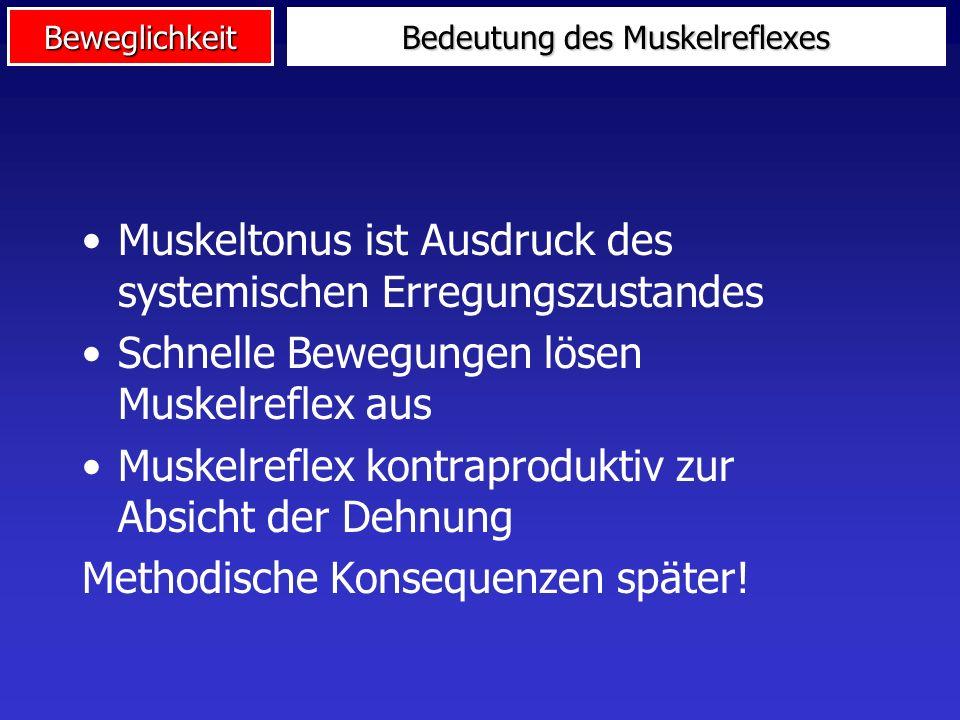 Beweglichkeit Muskel Rückenmark - Motoneuron Ib-Spindelneuron - Motoneuron Der Muskelreflex