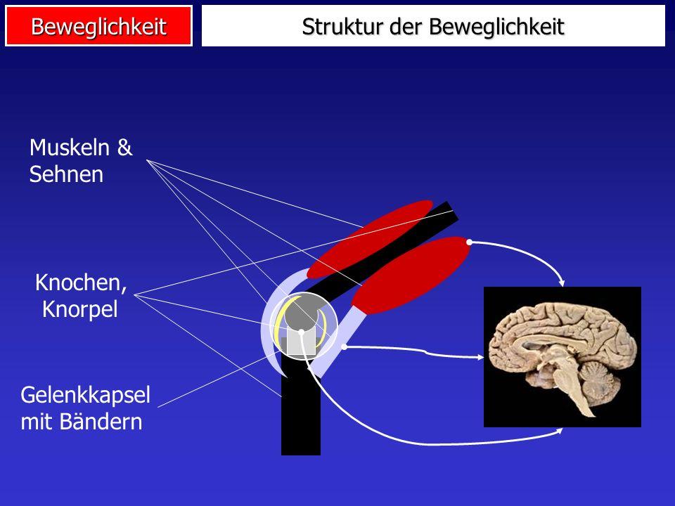 Beweglichkeit Verortung der Beweglichkeit AusdauerKraft Schnellig- keit Beweg- lichkeit Koord.