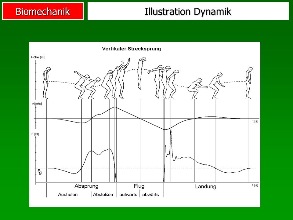 Biomechanik Illustration Dynamik