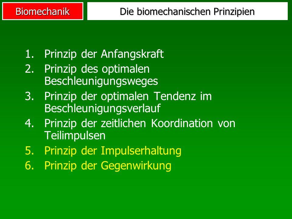 Biomechanik Die biomechanischen Prinzipien 1.Prinzip der Anfangskraft 2.Prinzip des optimalen Beschleunigungsweges 3.Prinzip der optimalen Tendenz im