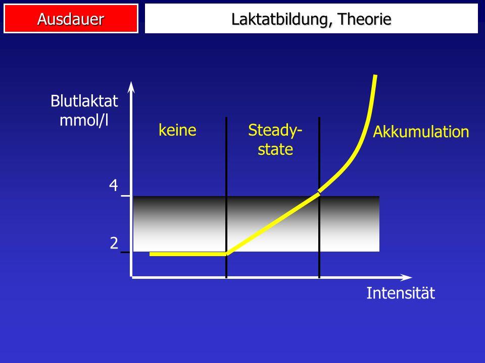Ausdauer 4 2 Laktatbildung, Theorie Blutlaktat mmol/l Intensität keineSteady- state Akkumulation