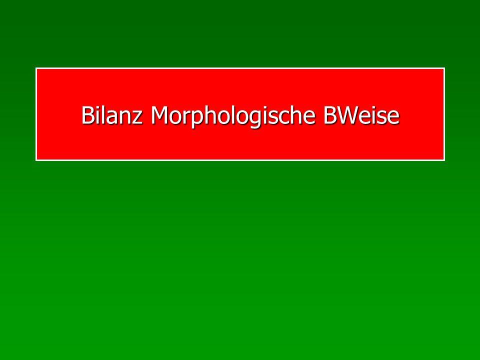 Bilanz Morphologische BWeise
