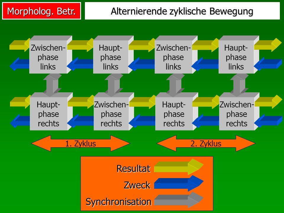 Morpholog. Betr. Alternierende zyklische Bewegung Zweck Resultat Synchronisation Haupt- phase rechts Zwischen- phase rechts Haupt- phase rechts Zwisch