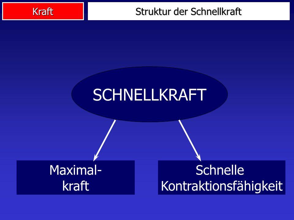 Kraft SCHNELLKRAFT Maximal- kraft Schnelle Kontraktionsfähigkeit Struktur der Schnellkraft