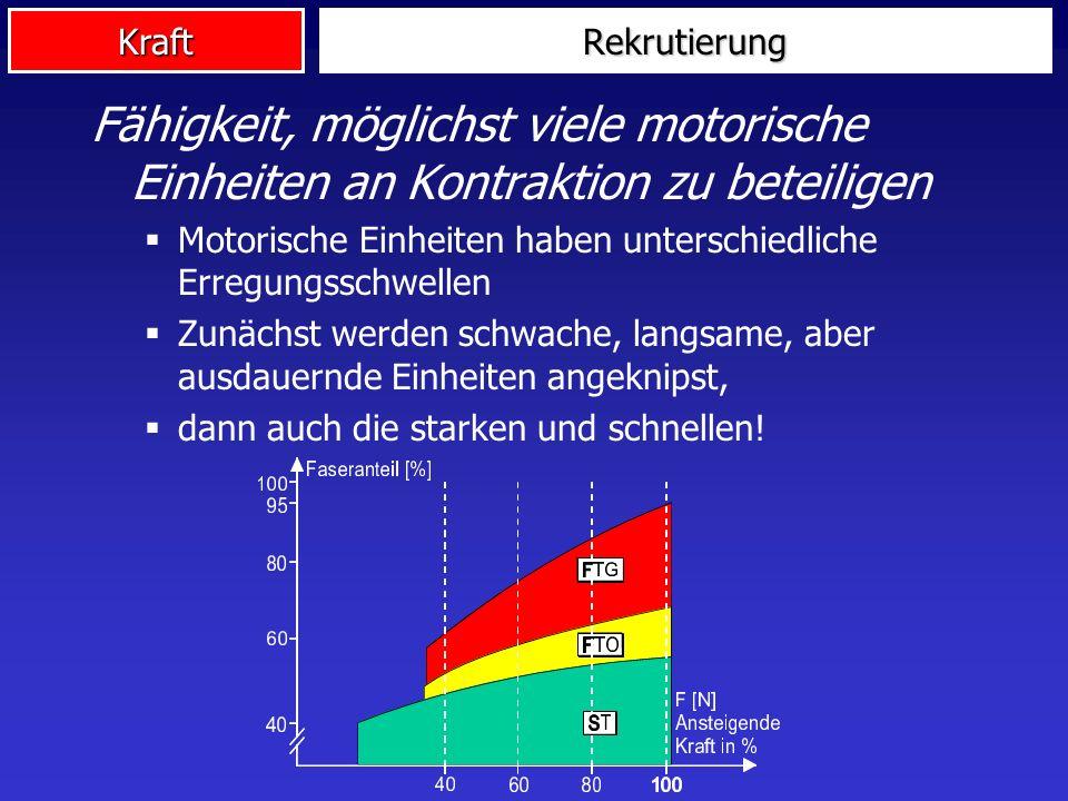 Kraft Fähigkeit, möglichst viele motorische Einheiten an Kontraktion zu beteiligen Motorische Einheiten haben unterschiedliche Erregungsschwellen Zunä