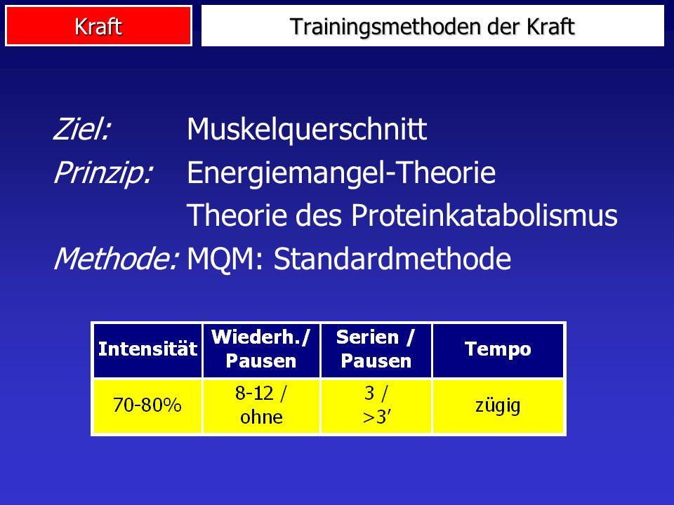 Kraft Ziel:Muskelquerschnitt Prinzip: Energiemangel-Theorie Theorie des Proteinkatabolismus Methode:MQM: Standardmethode Trainingsmethoden der Kraft