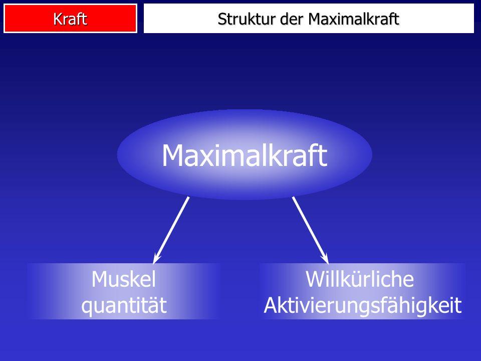 Kraft Maximalkraft Muskel quantität Willkürliche Aktivierungsfähigkeit Struktur der Maximalkraft