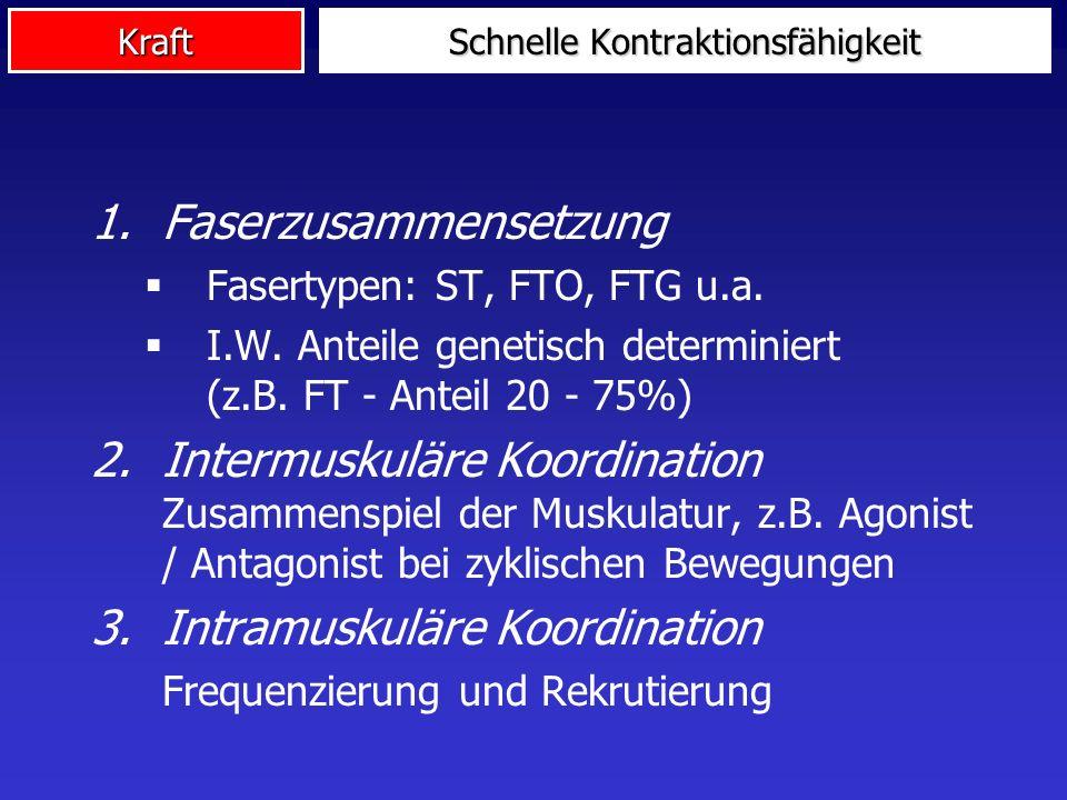 Kraft 1.Faserzusammensetzung Fasertypen: ST, FTO, FTG u.a. I.W. Anteile genetisch determiniert (z.B. FT - Anteil 20 - 75%) 2.Intermuskuläre Koordinati