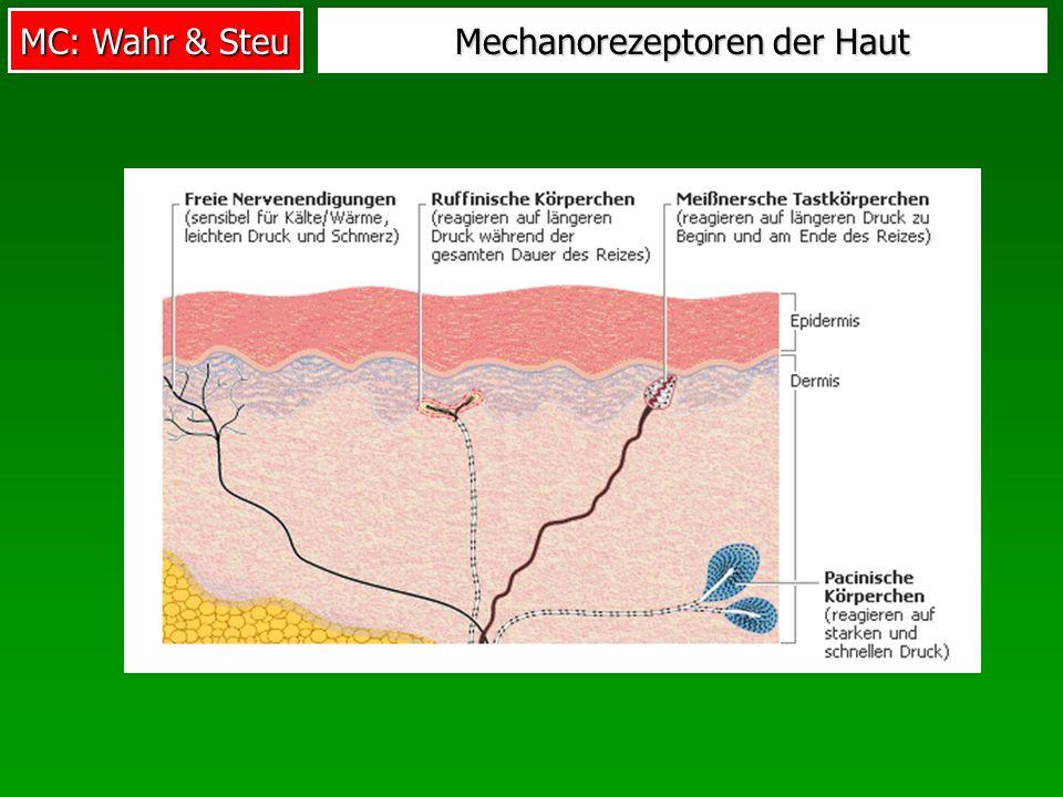MC: Wahr & Steu Mechanorezeptoren der Haut
