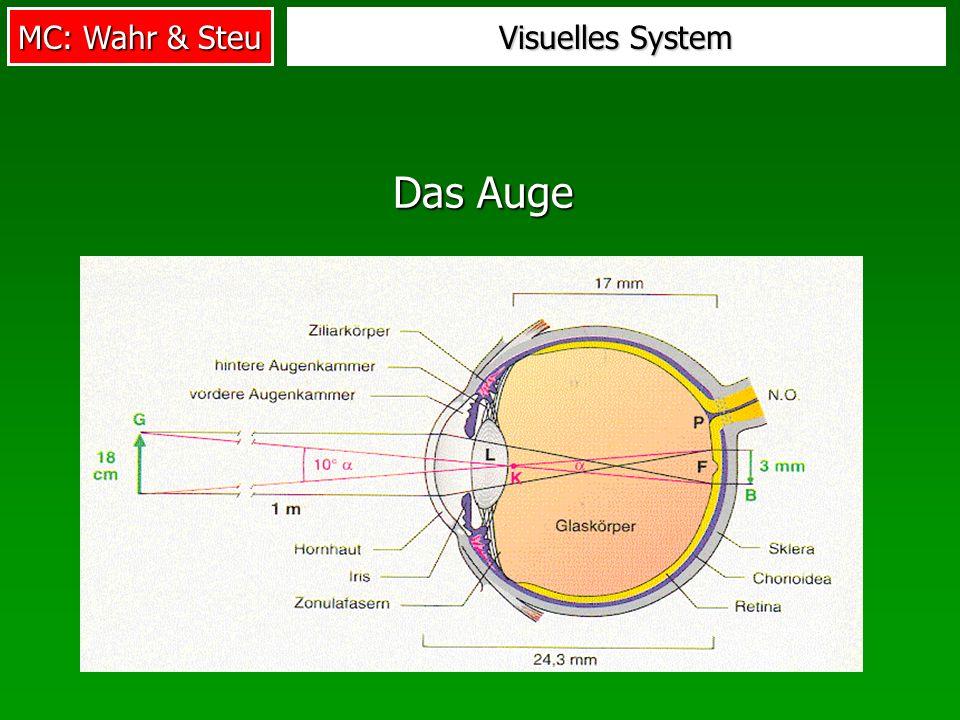 MC: Wahr & Steu Visuelles System Das Auge