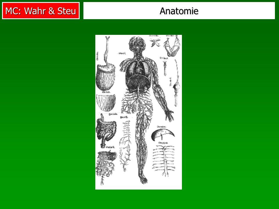 MC: Wahr & Steu Anatomie
