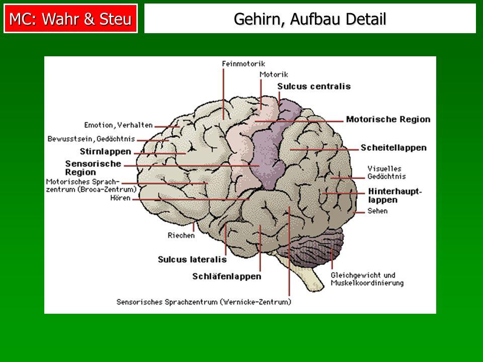 MC: Wahr & Steu Gehirn, Aufbau Detail
