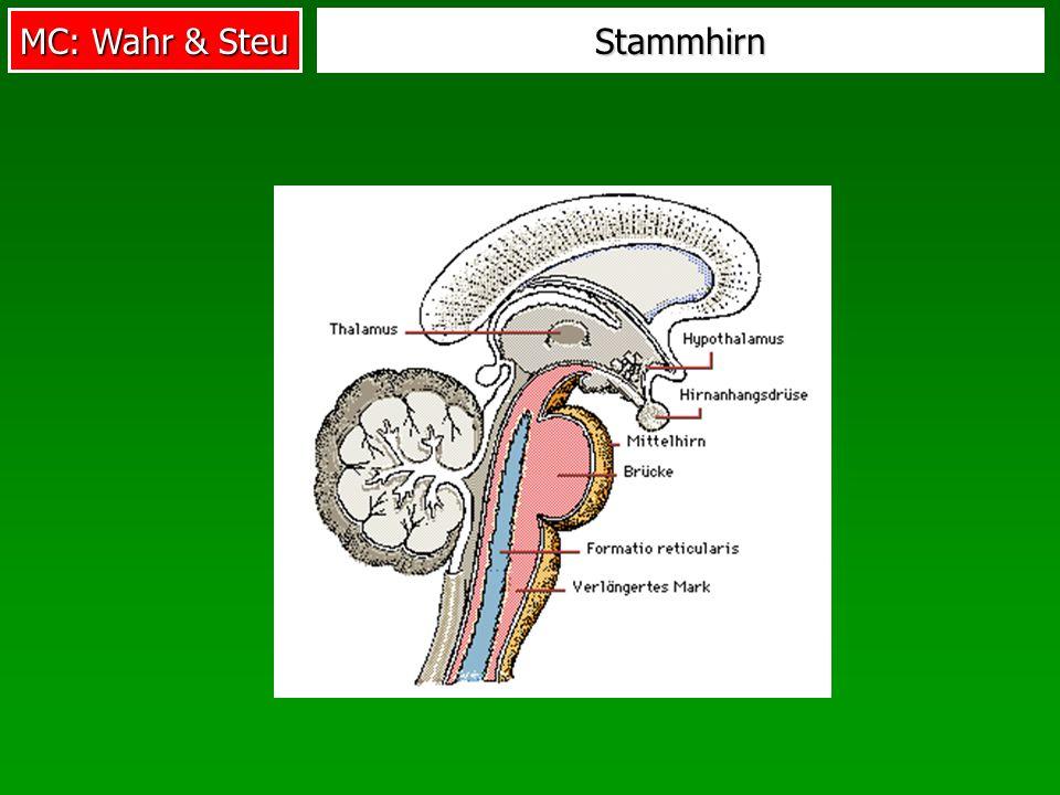 MC: Wahr & Steu Stammhirn