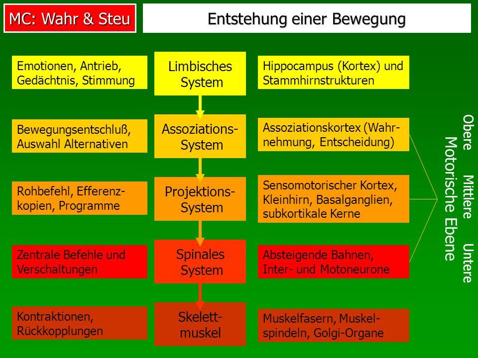 Entstehung einer Bewegung Obere Mittlere Untere Motorische Ebene Limbisches System Emotionen, Antrieb, Gedächtnis, Stimmung Hippocampus (Kortex) und S