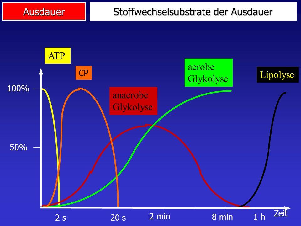 Ausdauer Stoffwechselsubstrate der Ausdauer ATPanaerobe Glykolyse aerobe Glykolyse Lipolyse CP 100% Zeit 50% 2 s20 s 1 h8 min 2 min