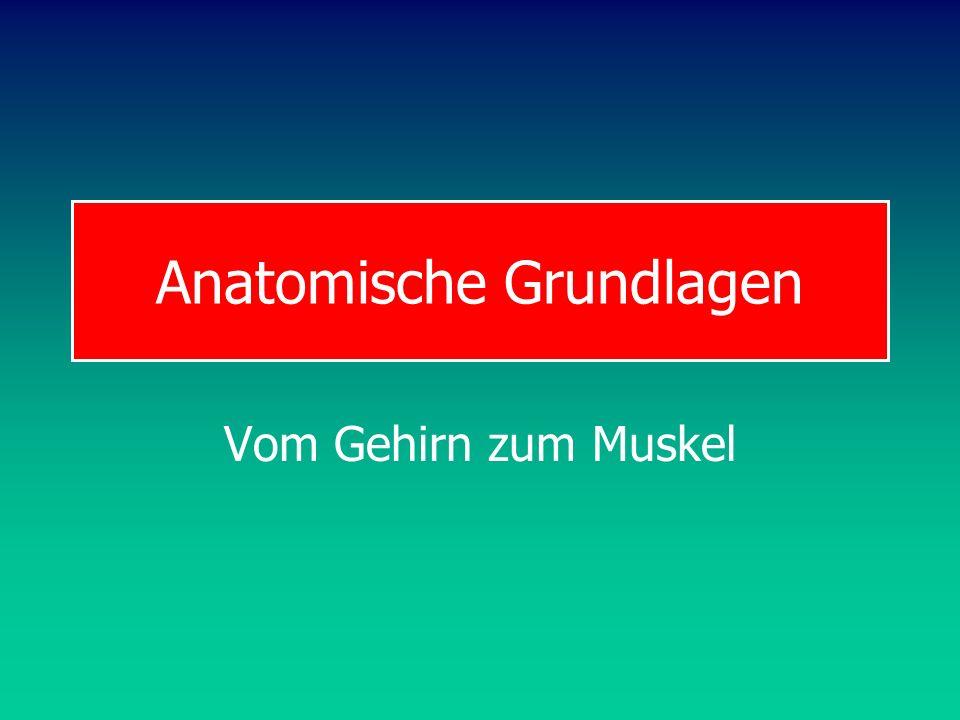 Programmtheorien Theorie generalisierter motorischer Programme (GMP-Theorie)
