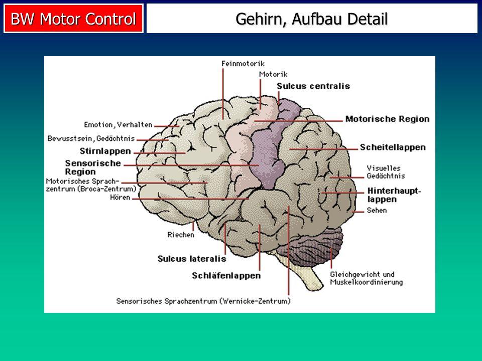 BW Motor Control Was wird gespeichert.GMP-Theorie nach R.A.
