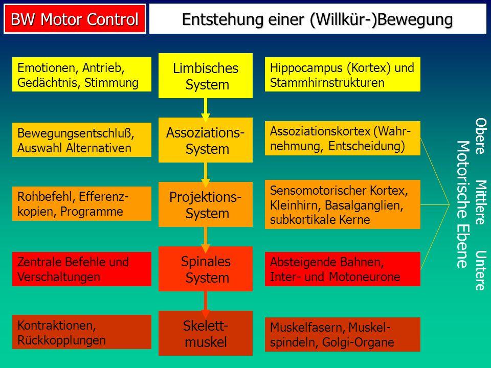 BW Motor Control Entstehung einer (Willkür-)Bewegung Obere Mittlere Untere Motorische Ebene Limbisches System Emotionen, Antrieb, Gedächtnis, Stimmung