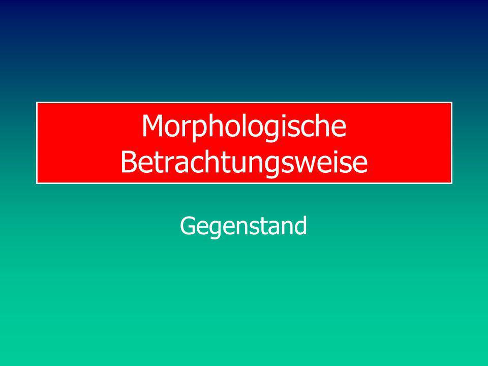Morphologische Betrachtungsweise Gegenstand