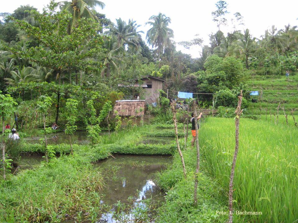 III. Beispiel MASIPAG in den Philippinen Foto: L. Bachmann