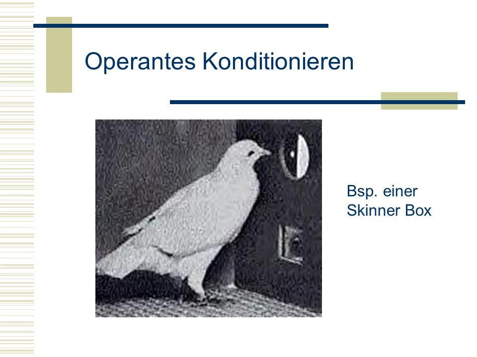 Bsp. einer Skinner Box Operantes Konditionieren