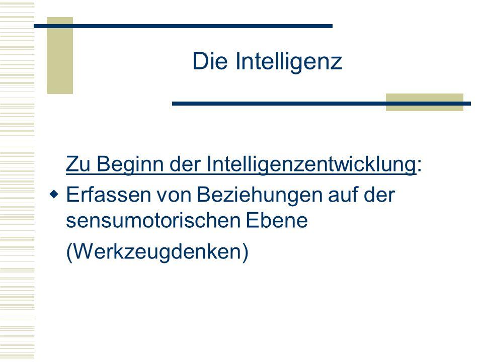 Die Intelligenz Zu Beginn der Intelligenzentwicklung: Erfassen von Beziehungen auf der sensumotorischen Ebene (Werkzeugdenken)