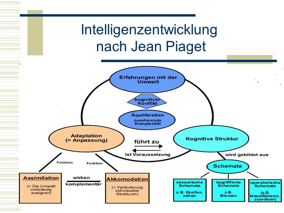 Intelligenzentwicklung nach Jean Piaget