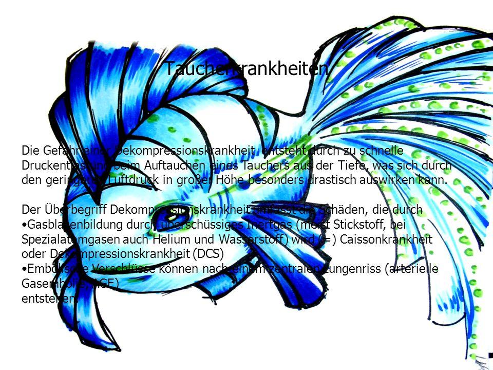 Taucherkrankheiten Die Gefahr einer Dekompressionskrankheit entsteht durch zu schnelle Druckentlastung beim Auftauchen eines Tauchers aus der Tiefe, w