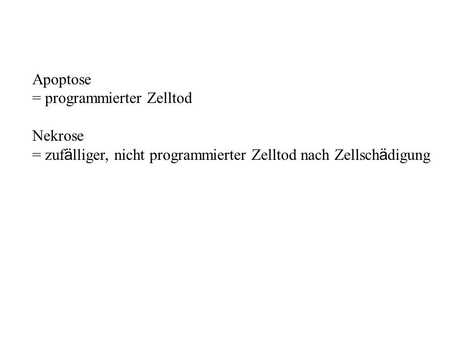 Apoptose = programmierter Zelltod Nekrose = zuf ä lliger, nicht programmierter Zelltod nach Zellsch ä digung