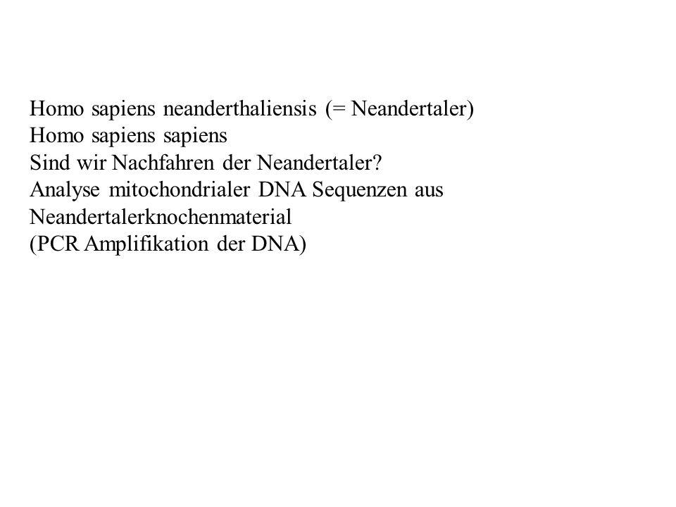 Homo sapiens neanderthaliensis (= Neandertaler) Homo sapiens sapiens Sind wir Nachfahren der Neandertaler? Analyse mitochondrialer DNA Sequenzen aus N
