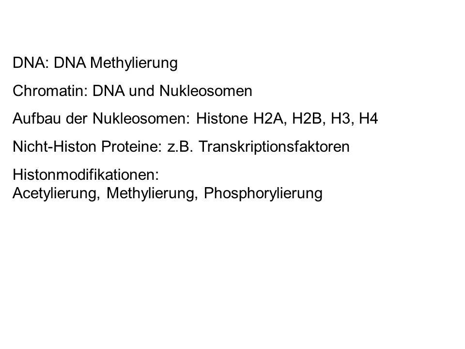 DNA: DNA Methylierung Chromatin: DNA und Nukleosomen Aufbau der Nukleosomen: Histone H2A, H2B, H3, H4 Nicht-Histon Proteine: z.B. Transkriptionsfaktor