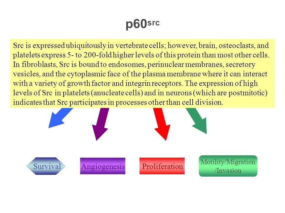 Oncovirus/Oncogene