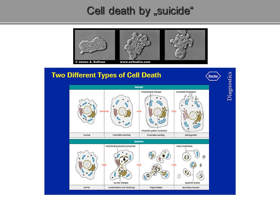 Cell death by suicide