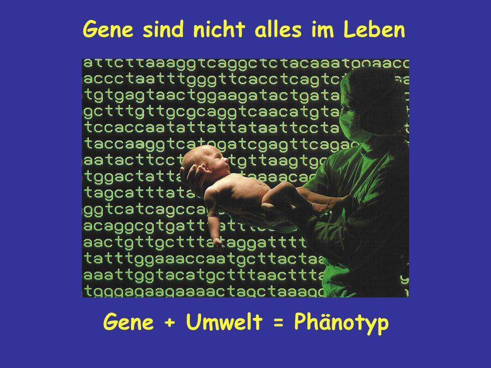 Gene sind nicht alles im Leben Gene + Umwelt = Phänotyp