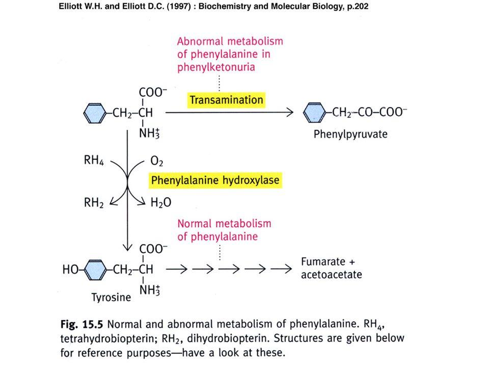 Proteinsynthese Phenylalaninspiegel (Blut, Liquor,...) Phenylalanin Harn mit mäuseartigem Geruch Phenolische Säuren (Phenylpyruva t, -acetat, - lactat) Tyrosin Phenylalanin- Hydroxylase mit Cofaktor Tetrahydrobiopterin L-Dopa *) Thyreoglobuline Adrenalin Schilddrüsenhormon e MelaninNoradrenalin 1/4 O2O2 3/4 H2OH2O *) = L-Dihydroxyphenylalanin = Stoffwechselblock: stark reduzierte oder völlig fehlende Enzymaktivität = erhöht = erniedrigt Abb.1: Stoffwechsel bei PKU bzw.