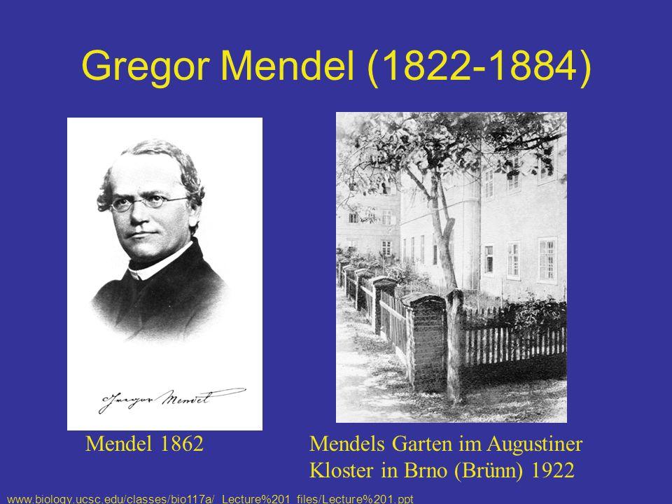 Gregor Mendel (1822-1884) Mendels Garten im Augustiner Kloster in Brno (Brünn) 1922 Mendel 1862 www.biology.ucsc.edu/classes/bio117a/ Lecture%201_files/Lecture%201.ppt