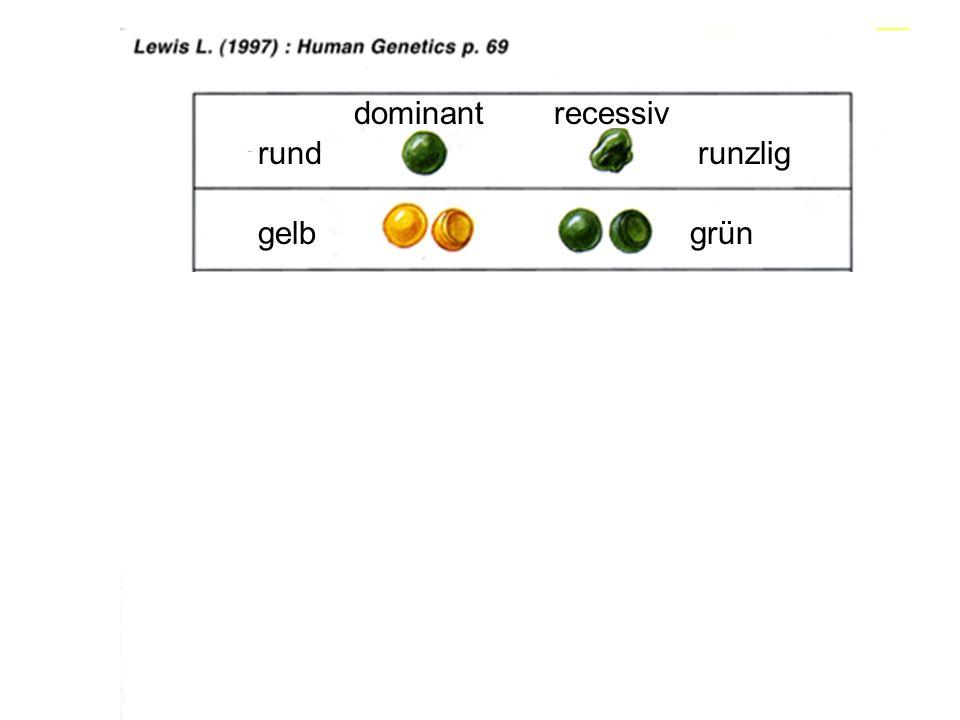 434 dominantrecessiv grün rundrunzlig gelb