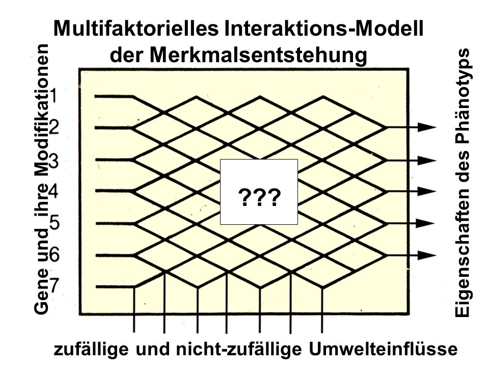 Gene und ihre Modifikationen zufällige und nicht-zufällige Umwelteinflüsse Eigenschaften des Phänotyps Multifaktorielles Interaktions-Modell der Merkmalsentstehung ???