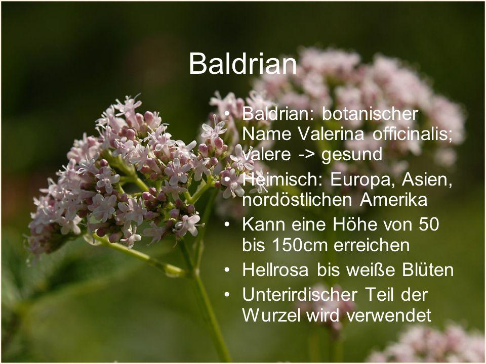 Baldrian Baldrian: botanischer Name Valerina officinalis; valere -> gesund Heimisch: Europa, Asien, nordöstlichen Amerika Kann eine Höhe von 50 bis 150cm erreichen Hellrosa bis weiße Blüten Unterirdischer Teil der Wurzel wird verwendet