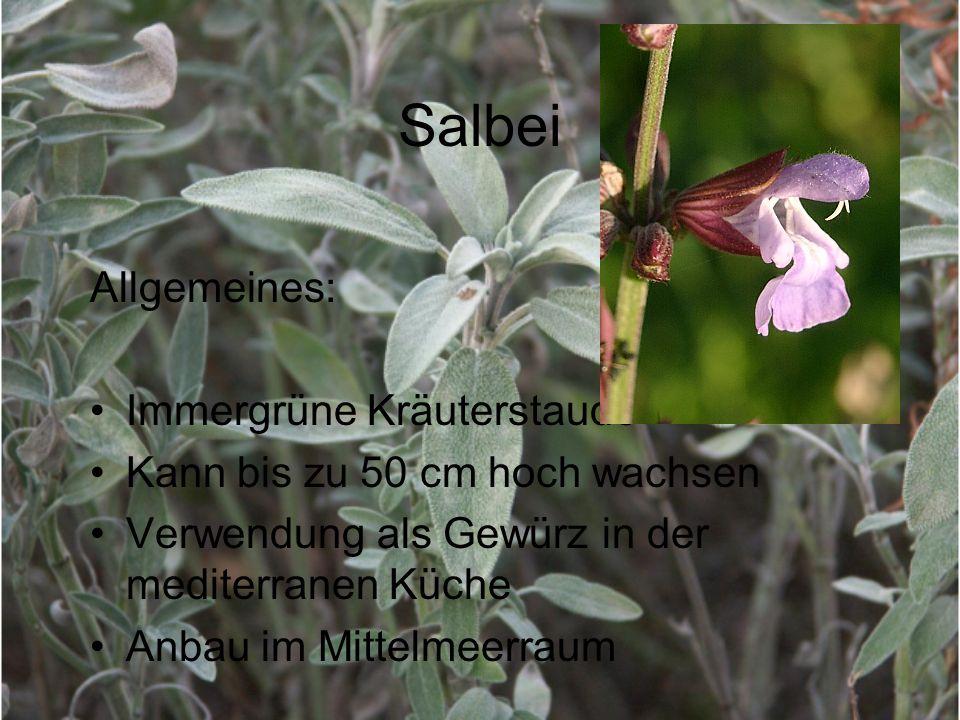 Salbei Allgemeines: Immergrüne Kräuterstaude Kann bis zu 50 cm hoch wachsen Verwendung als Gewürz in der mediterranen Küche Anbau im Mittelmeerraum