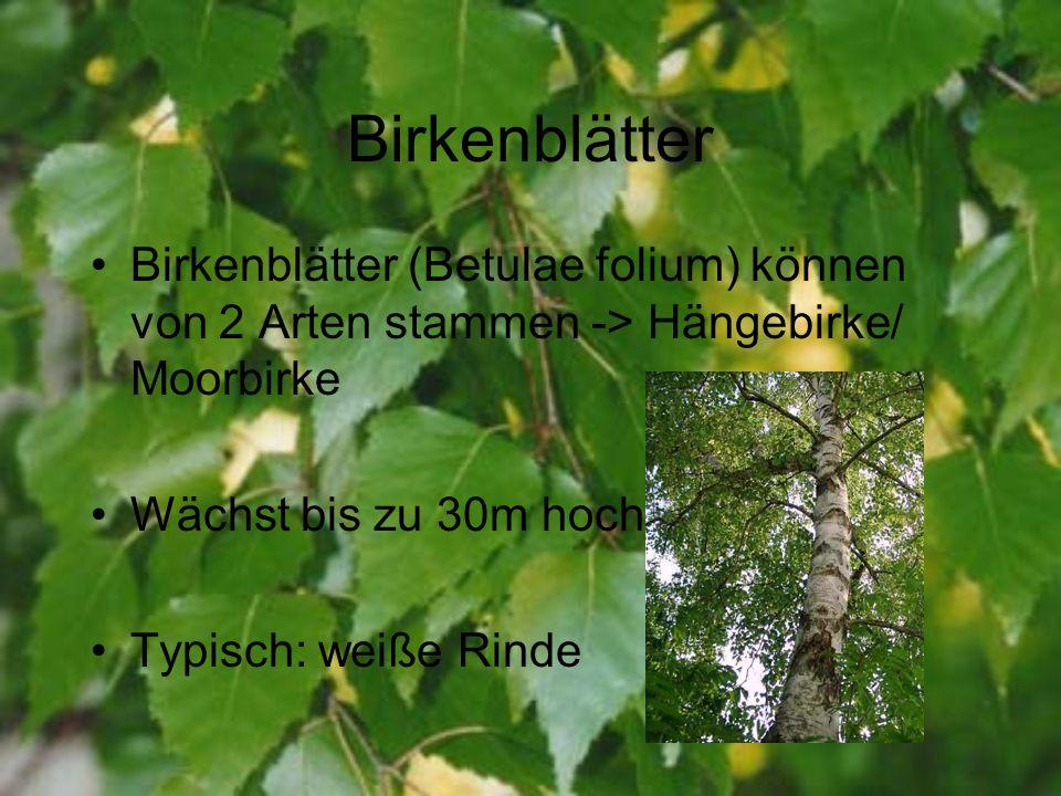Birkenblätter Birkenblätter (Betulae folium) können von 2 Arten stammen -> Hängebirke/ Moorbirke Wächst bis zu 30m hoch Typisch: weiße Rinde