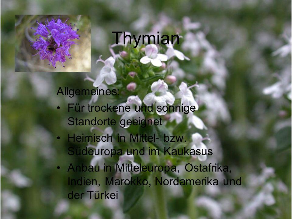 Thymian Allgemeines: Für trockene und sonnige Standorte geeignet Heimisch in Mittel- bzw. Südeuropa und im Kaukasus Anbau in Mitteleuropa, Ostafrika,