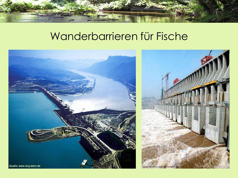 Wanderbarrieren für Fische Quelle: www.planet-wissen.de Quelle: www.img.stern.de