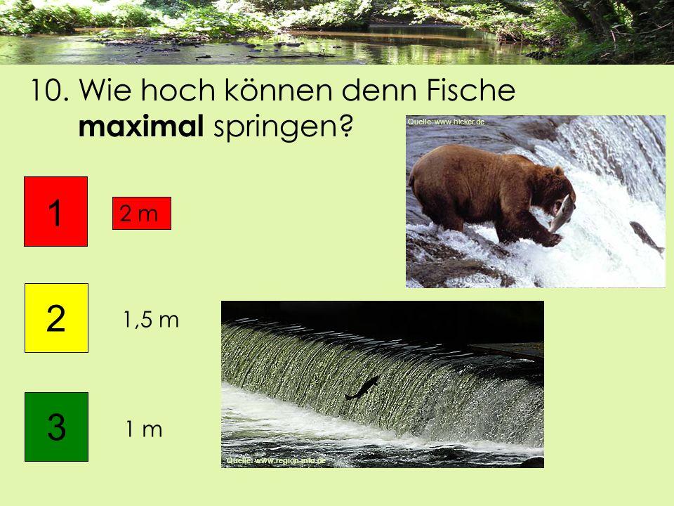 10. Wie hoch können denn Fische maximal springen? 1 m 1 2 2 m 3 1,5 m Quelle: www.region-info.de Quelle: www.hicker.de