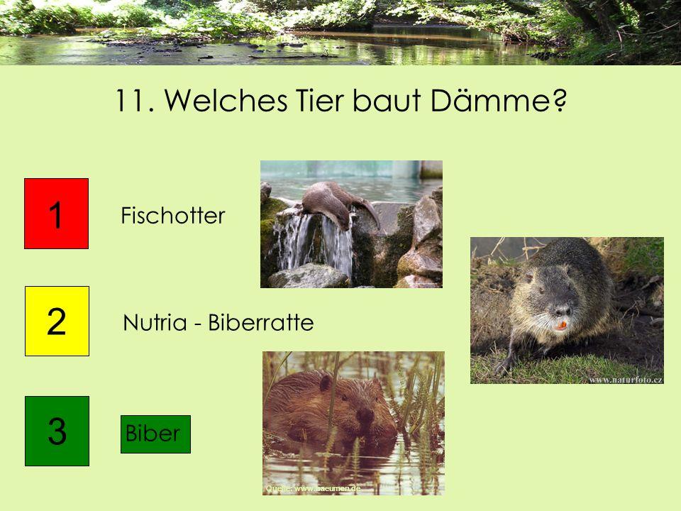 11. Welches Tier baut Dämme? Biber 1 2 Fischotter 3 Nutria - Biberratte Quelle: www.baeumen.de