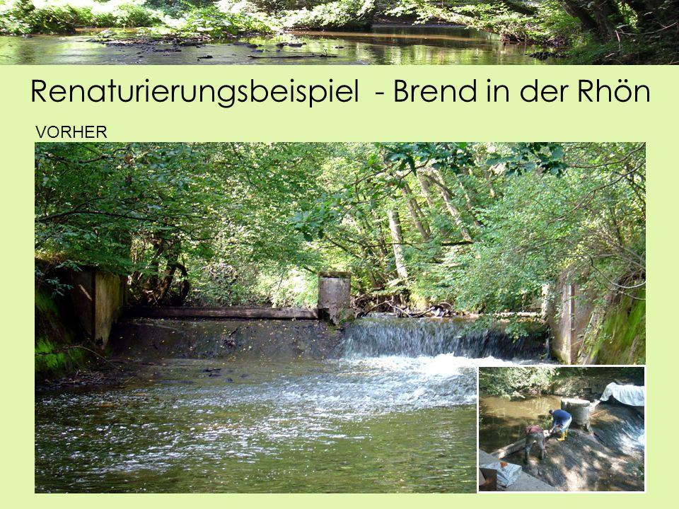 VORHER Renaturierungsbeispiel - Brend in der Rhön
