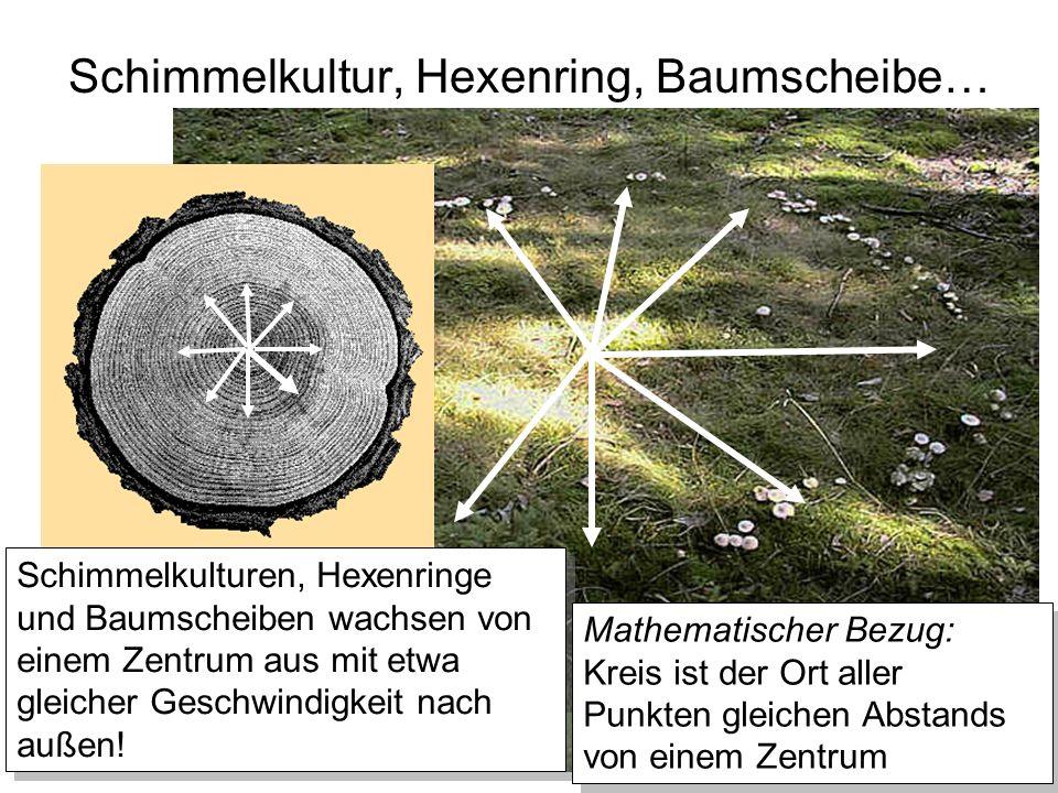 Schimmelkultur, Hexenring, Baumscheibe… Schimmelkulturen, Hexenringe und Baumscheiben wachsen von einem Zentrum aus mit etwa gleicher Geschwindigkeit