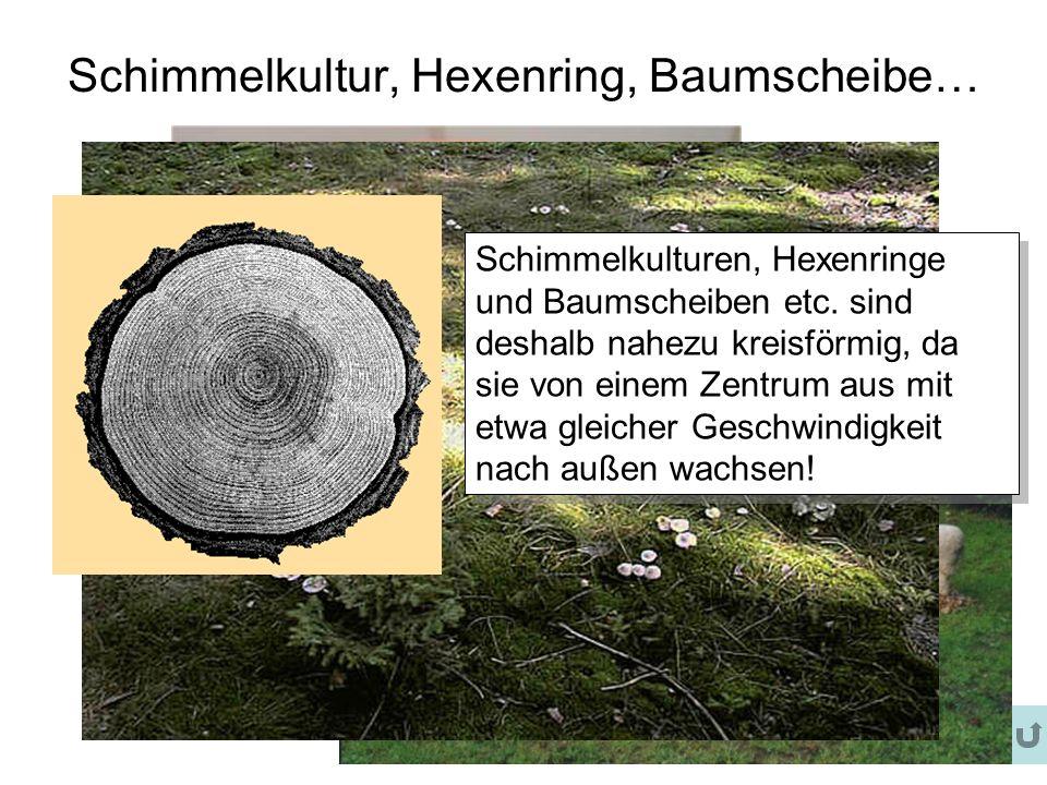 Schimmelkultur, Hexenring, Baumscheibe… Schimmelkulturen, Hexenringe und Baumscheiben etc. sind deshalb nahezu kreisförmig, da sie von einem Zentrum a