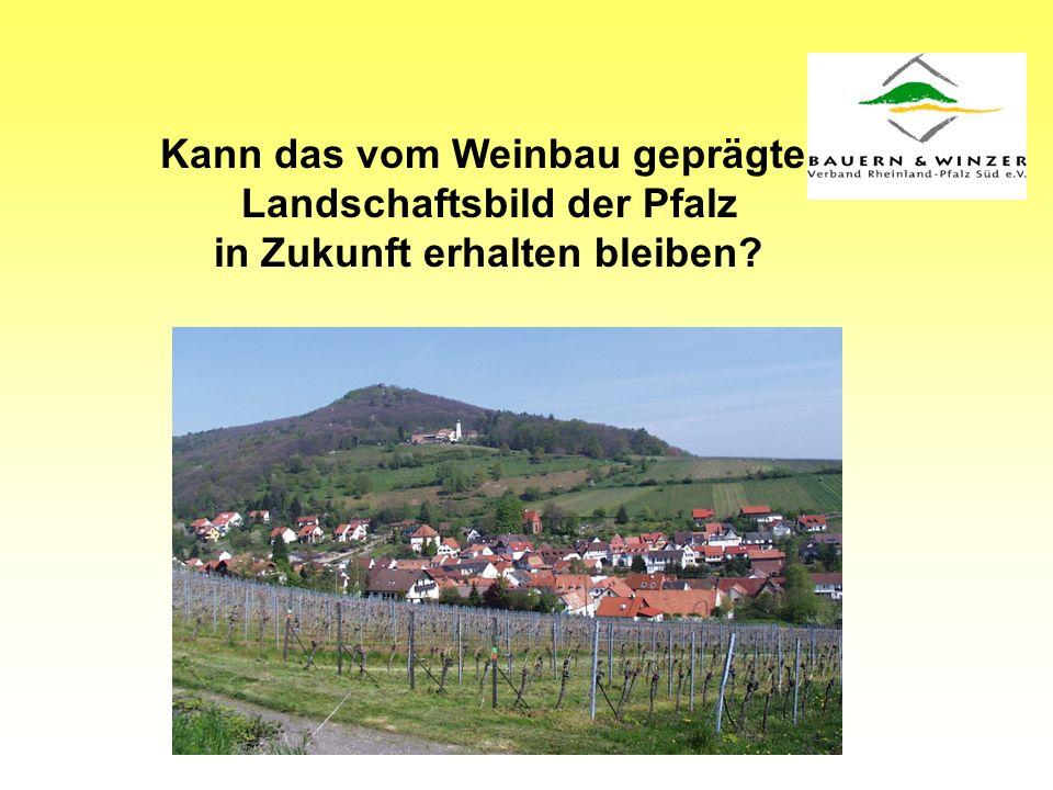 Kann das vom Weinbau geprägte Landschaftsbild der Pfalz in Zukunft erhalten bleiben